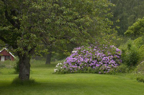 Planter – Min Oase