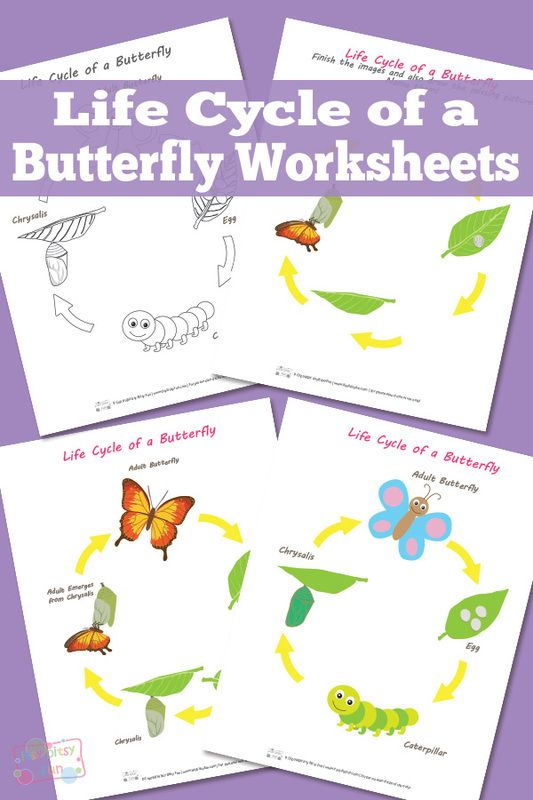 life cycle of a butterfly worksheet a butterfly worksheets and butterflies. Black Bedroom Furniture Sets. Home Design Ideas