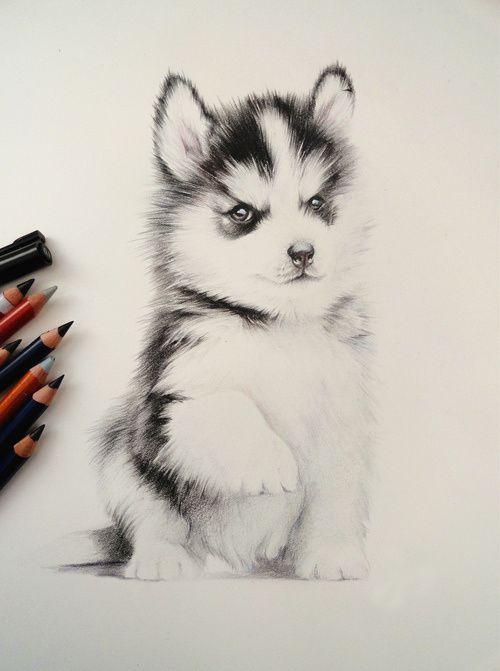 Mas Nuevo Absolutamente Gratis Perros Dibujos A Lapiz Sugerencias Lamentablemente Todavi Dibujos De Perros Perros Dibujos A Lapiz Dibujo De Perro