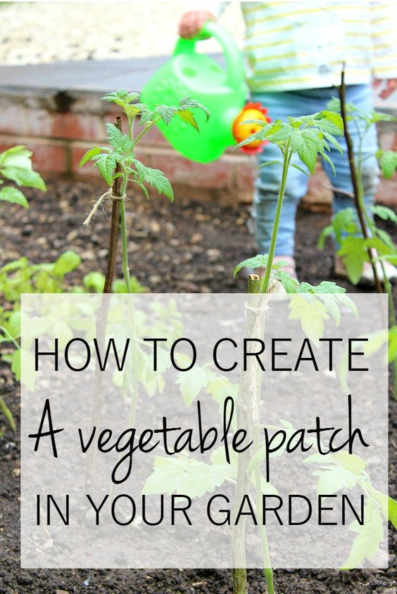 How to create a vegetable patch in your garden