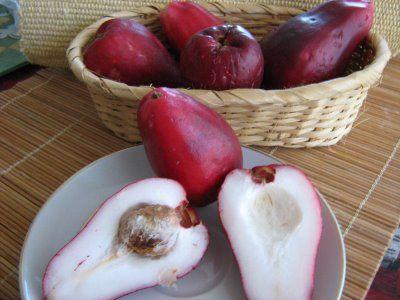Honduras, Avocado and A fruit on Pinterest