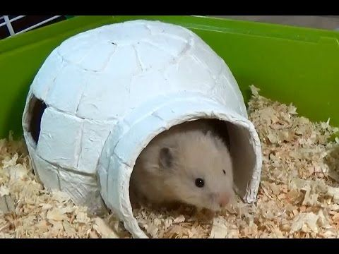 How To Make Little Hamster House Very Easy Quick Diy Youtube Diy Hamster House Hamster House Hamster Diy
