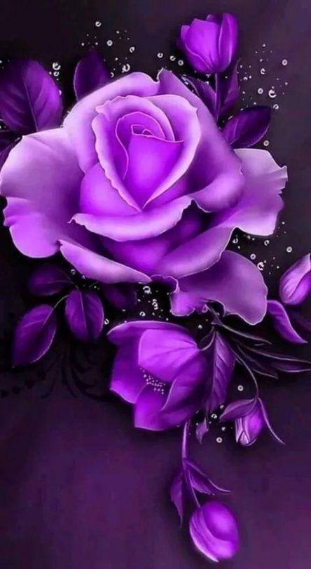 Best wall paper rose purple ideas #wall