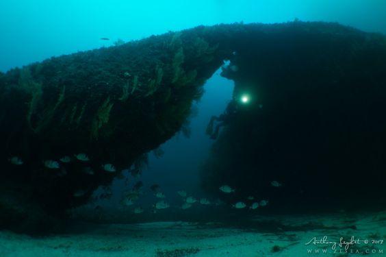 Vidéos sous-marines #plongée #video #underwater #mer #ocean #diving #scuba