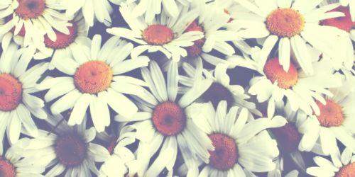 Flower Twitter Header