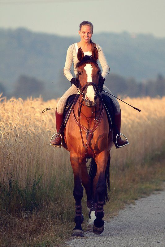 Horses, Beautiful horses and Horse and rider on Pinterest