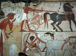 Image result for ancient egyptian horses