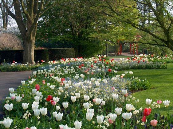 Landscape Design Garden Ideas Bulbs Landscape Design
