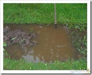 Clay soil does not drain well home garden pinterest for Soil not draining