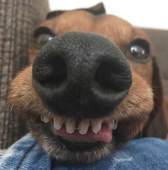 I M Dumb She S Dumber In 2020 Funny Dog Faces Smiling Dogs