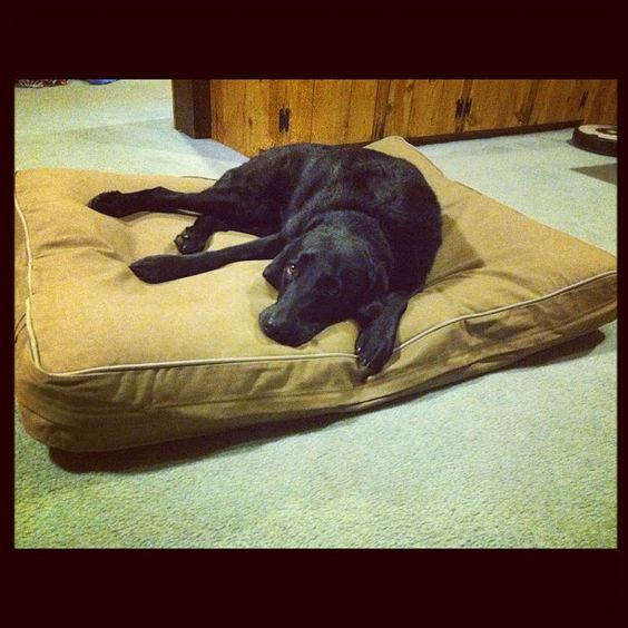 Maggie and her L.L.Bean dog bed. Photo by cbernier14 • Instagram
