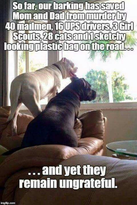 Vet Office Not Park Fool Humor Art 3 x 2 Funny Dog Meme Fridge Toolbox Magnet