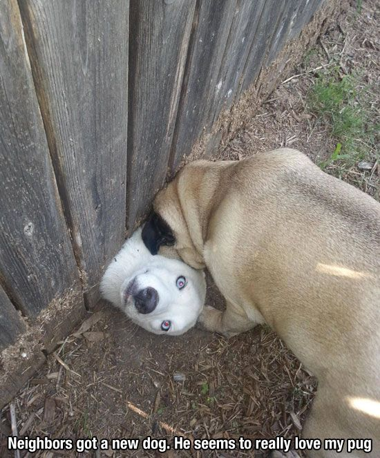 Aw: Doggie, Funny Animals, Neighbors Dog, Giggle, Funny Dogs, Funny Stuff, Friend, Dogs Face