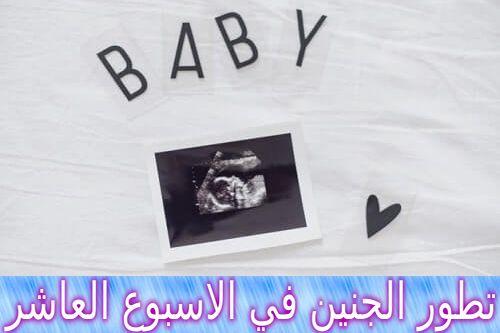تطور الجنين في الاسبوع العاشر من الحمل Polaroid Film