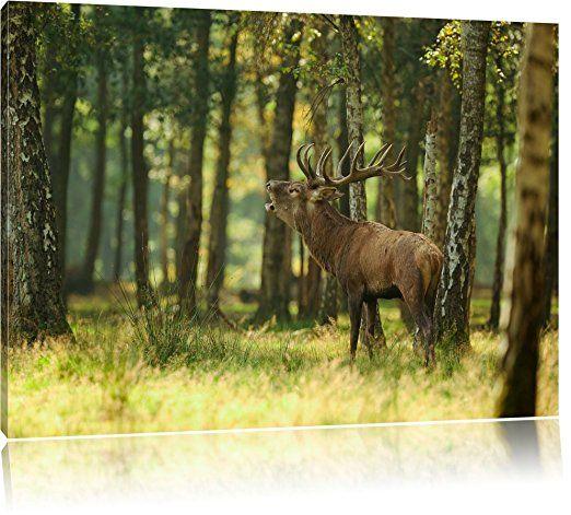 hirsch im wald bild auf leinwand xxl riesige bilder fertig gerahmt mit keilrahmen kunstdruck wandbild rahmen g forest art prints sunset wall foto dreiteilig bestellen