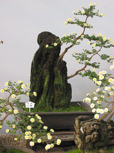 ~~Ghost bonsai by xeal~~