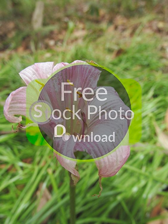 Download Free Photo - Pink Flower with Green Background - Wildflower Free and Public Domain Stock Photo Download