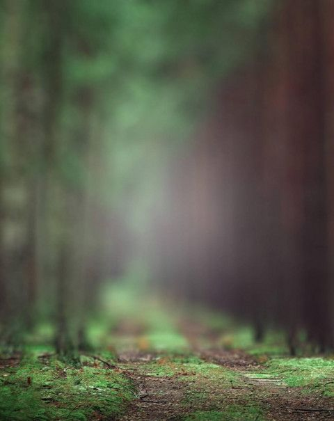 Forest Blur Cb Background Editing For Picsart Blurred Image Free Dowwnlo Photo Background Images Hd Light Background Images Photoshop Digital Background Hd blur background images free