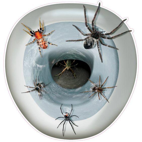 Novelty Toilet Seat Spider Cover Sticker  www.bobbiejosonestopshop.com  #BobbieJosOneStopShop #Halloween #Prank #Spiders #ToiletBowl #Sticker #Creepy #Decor
