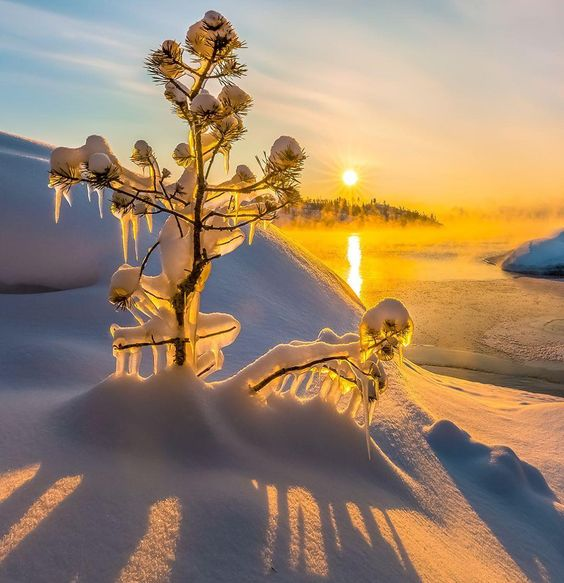"""59.9k Likes, 320 Comments - EARTH FOCUS (@earthfocus) on Instagram: """"Ice sculptures on branches around Lagoda Lake, #Russia. ❄️ Photo by @Fedorlashkov Explore. Share.…"""""""