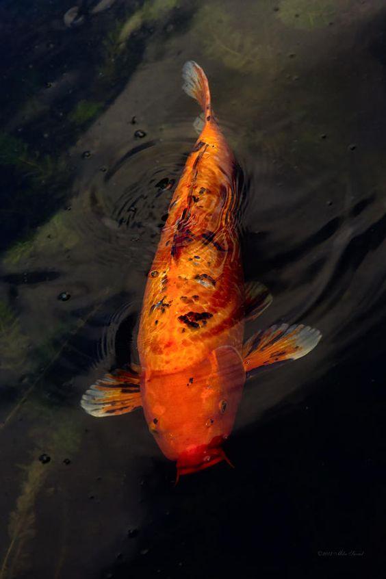 Fish big fish little pond photograph fish big fish for Big fish printing