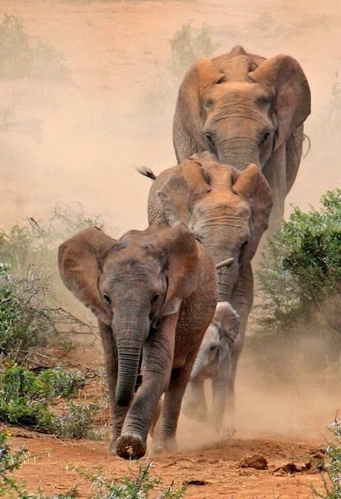 The Extinction of Compassion: A Tale of Empires and Elephants 2/2 | Nomadic Politics