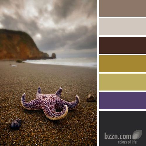 Living room colors? (replace the violet with blue): Sea Stars, Upheld, Sea Shells, Star Fish, California Beach, California Starfish, Seashell, Purple Starfish, On The Beach
