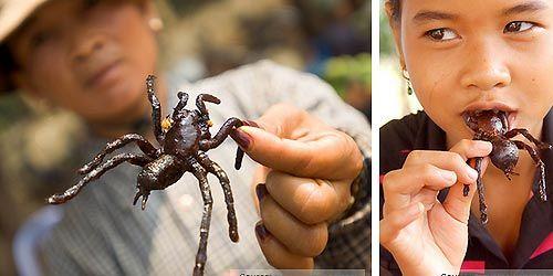 Những chú nhện đen còn được phụ nữ Campuchia xem là thần dược cho sắc đẹp