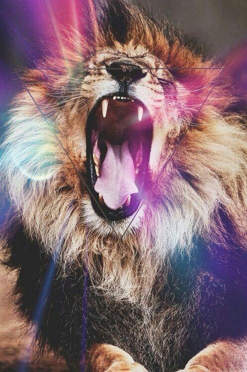 Lion tumblr background - photo#15