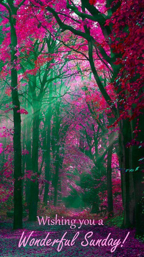 Happy Sunday Beautiful Landscapes Nature Photography Beautiful Nature