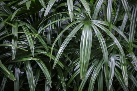Wenig Licht Pflanzen Fur Dunkle Raume In 2020 Pflanzen Fur Dunkle Raume Pflanzen Und Dunkle Raume