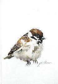 Bildresultat för sparrow in watercolour
