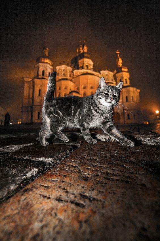 cat monk - null