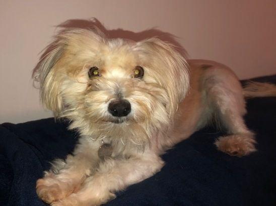 Adopt Stella On Terrier Mix Dogs Pet Adoption Animal Rescue