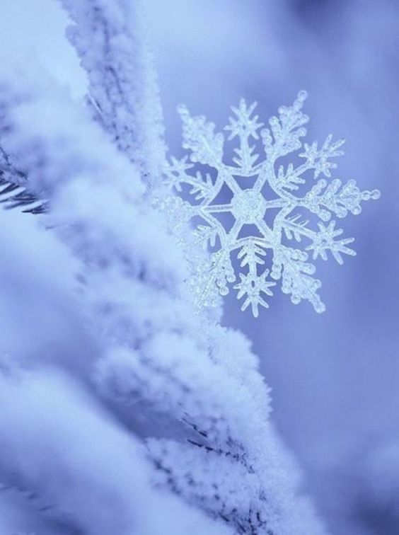 Snowflakes ☄ #beautiful: