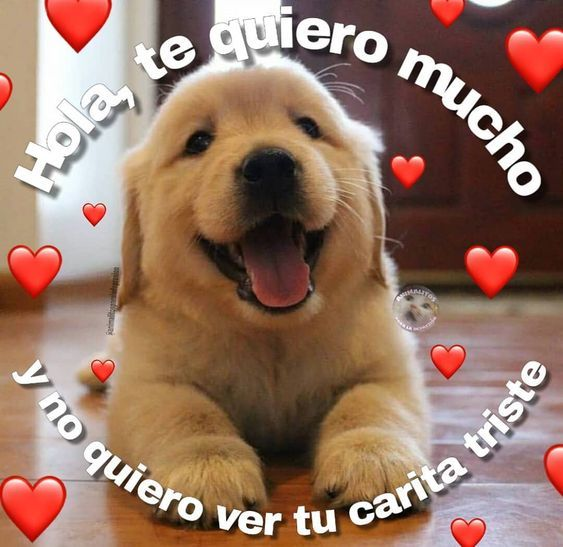 Check Out This Awesome Post Imagenes De Te Quiero Frases Memes Amor Memes Lindos