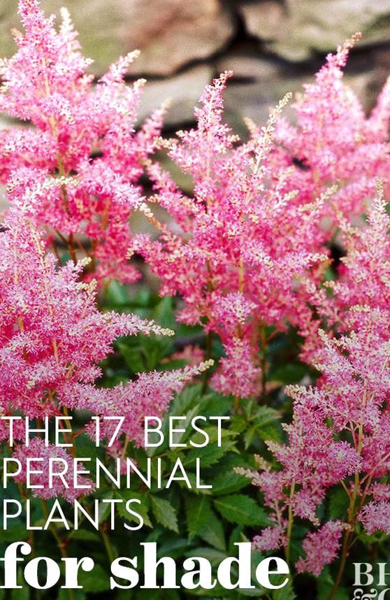 Brighten Up Shaded Spots In Your Landscape With These Easy To Grow Colorful Shade Loving Perennial Plants In 2020 Shade Loving Perennials Best Perennials Shade Plants