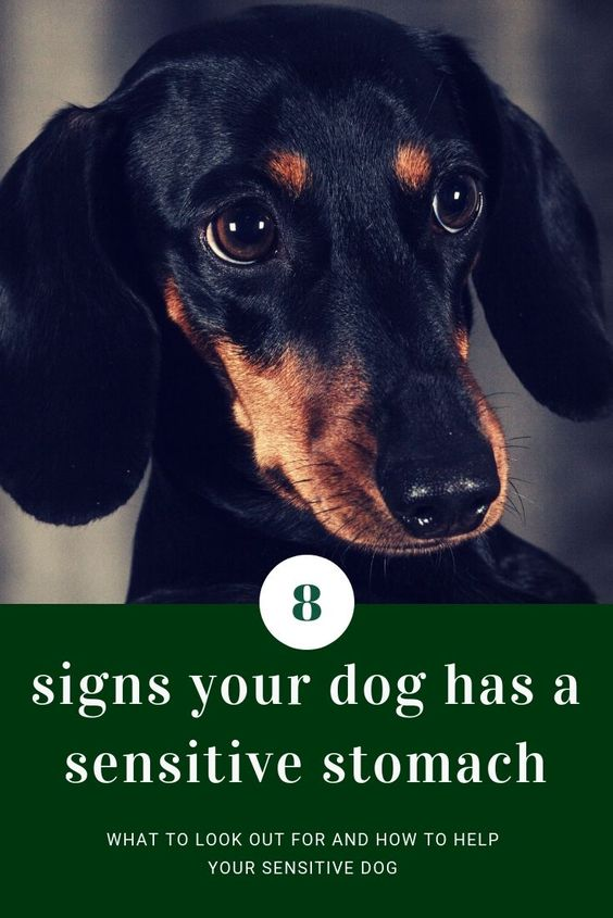 7 Signs Your Pet Has A Sensitive Stomach Dogs What Cats Can Eat Cat With Blue Eyes