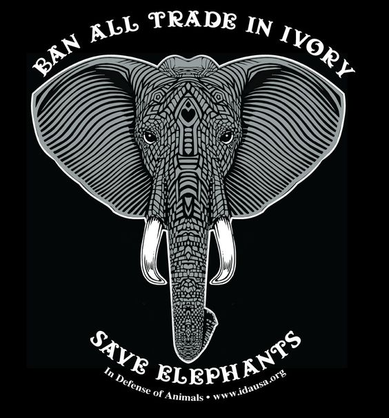 Ban All Trade In Ivory-Save Elephants  In Defense of Animals   www.idausa.org