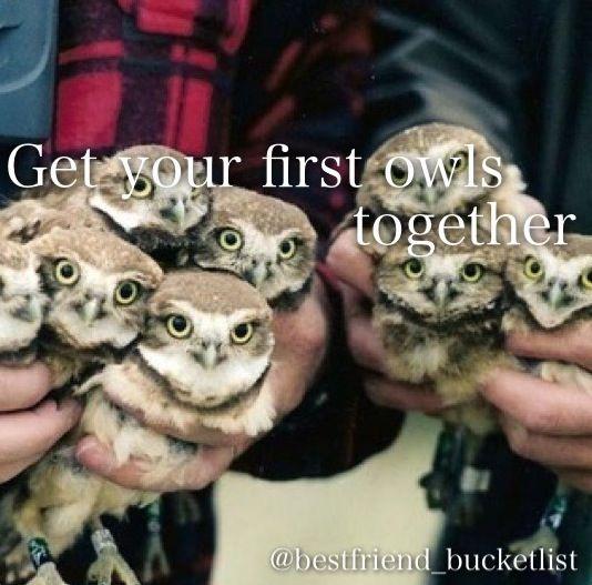 Baby owls :D