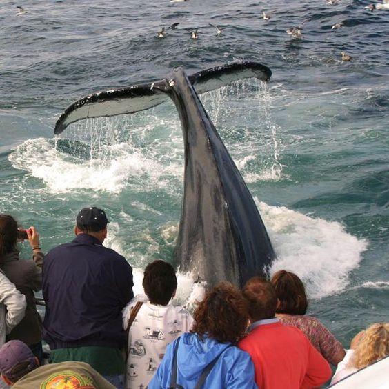 Cape cod whale watching massachusetts travel pinterest for Cape cod deep sea fishing