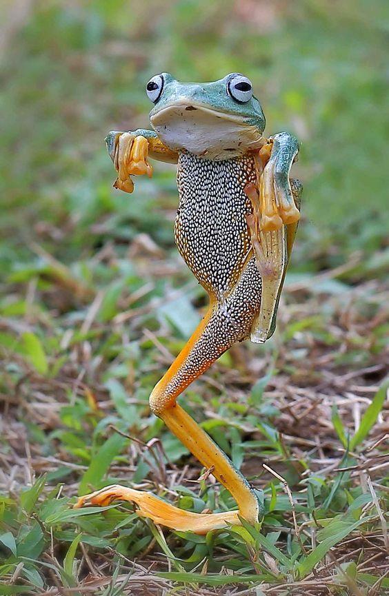 """"""" ça, ce n'est pas une grenouille de bénitier"""" OU """"Bouge ton corps ! """"/ Move ! / Grenouille. / Frog."""