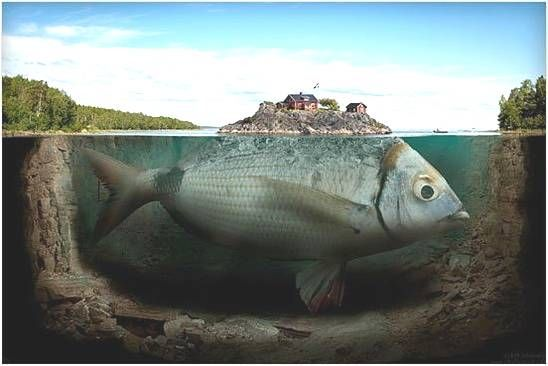 Image result for giant fish
