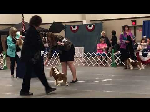 Breeder And Exhibitor Of Cavalier King Charles Spaniels In Eagle