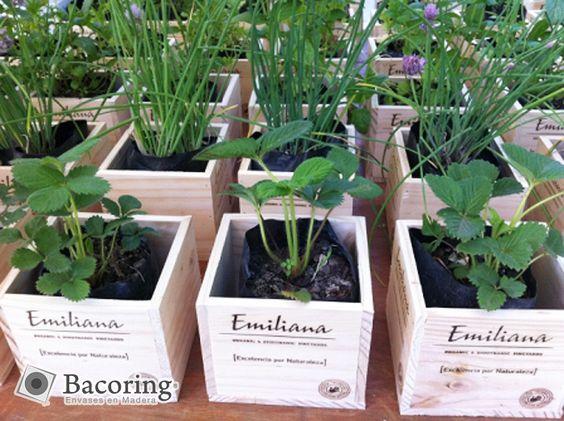 Maceteros para hierbas arom ticas bing im genes plants - Maceteros de madera ...