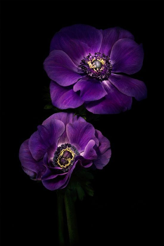 Purple Flowers On A Beautiful Flower Can Completely Change The Look And Appeal Of Your Home Garde Small Purple Flowers Purple Flowers Purple Flowers Wallpaper