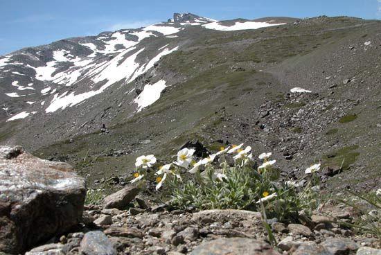 Sierra Nevada, Parque nacional, parque natural, en Waste magazine: