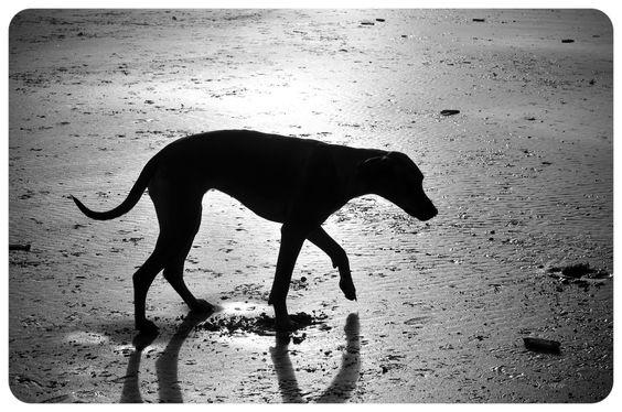 Shady dog