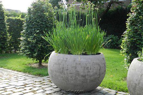Grand pot de fleurs (vasque, vase, jardinière) bombé en ...