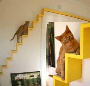 escalier pour chat astuces pour chien et chat pinterest chats et animaux. Black Bedroom Furniture Sets. Home Design Ideas